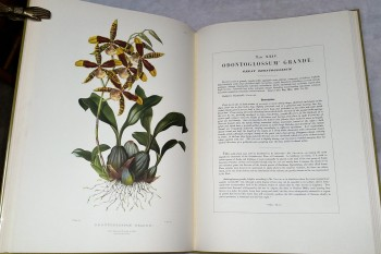 Image for The Orchidaceae of Mexico and Guatemala