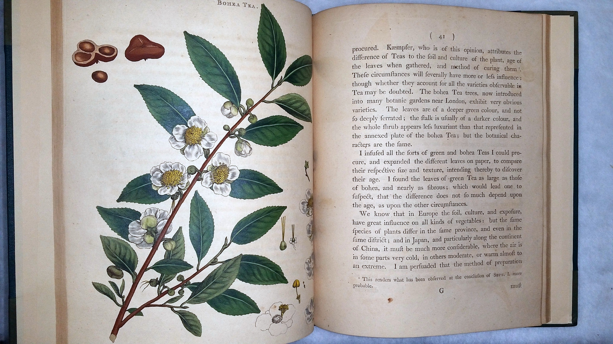 Image for The Natural History of the Tea-Tree, with Observations on the Medical Qualities of Tea, and on the Effects of Tea-Drinking