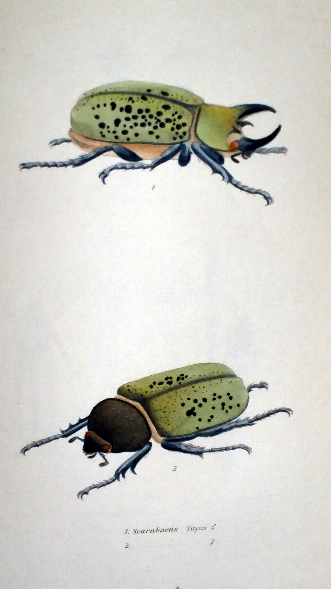Image for The Complete Writings of Thomas Say on the Entomology of North America (Two Volumes)