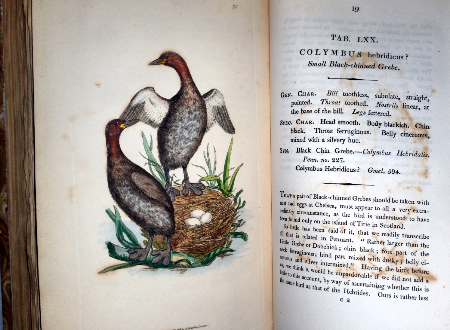 Image for The British Miscellany:  Or Coloured Figures of New, Rare, or Little Known Animal Subjects; Many Not Before Ascertained to be Inhabitants of the British Isles; and Chiefly in the Possession of the Author (Numbers 1-12, with Preface, bound as Single Vol.)
