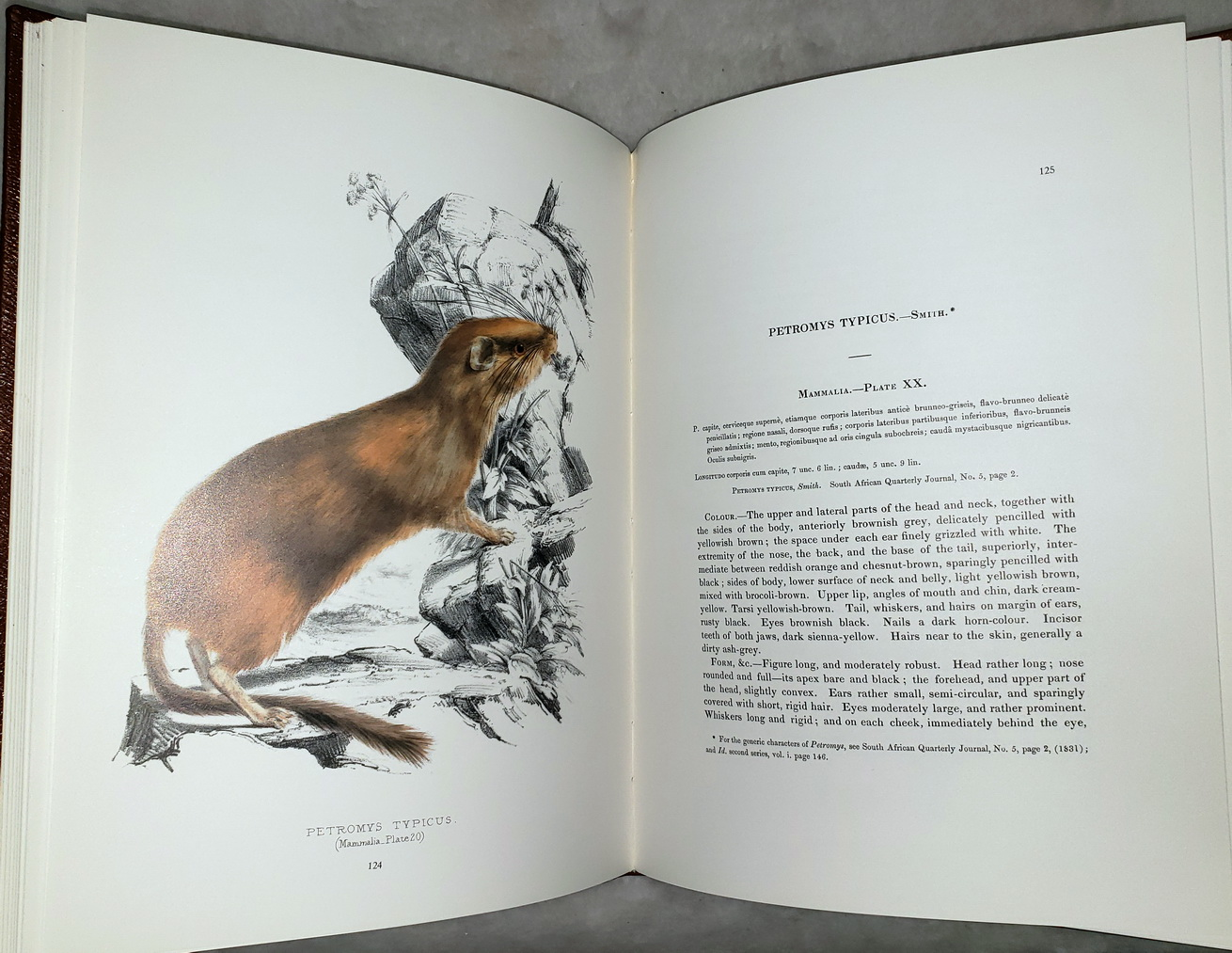 Image for Illustrations of the Zoology of South Africa (Three volumes)