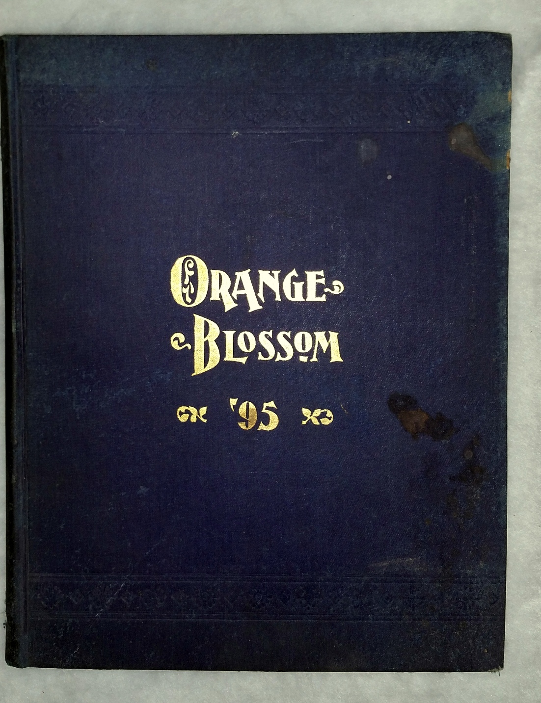 Image for The Orange Blossom ['95]