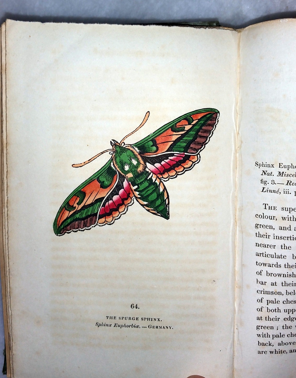 Image for The Book of Butterflies, Sphinxes and Moths (Volume II ONLY of a two Volume set)