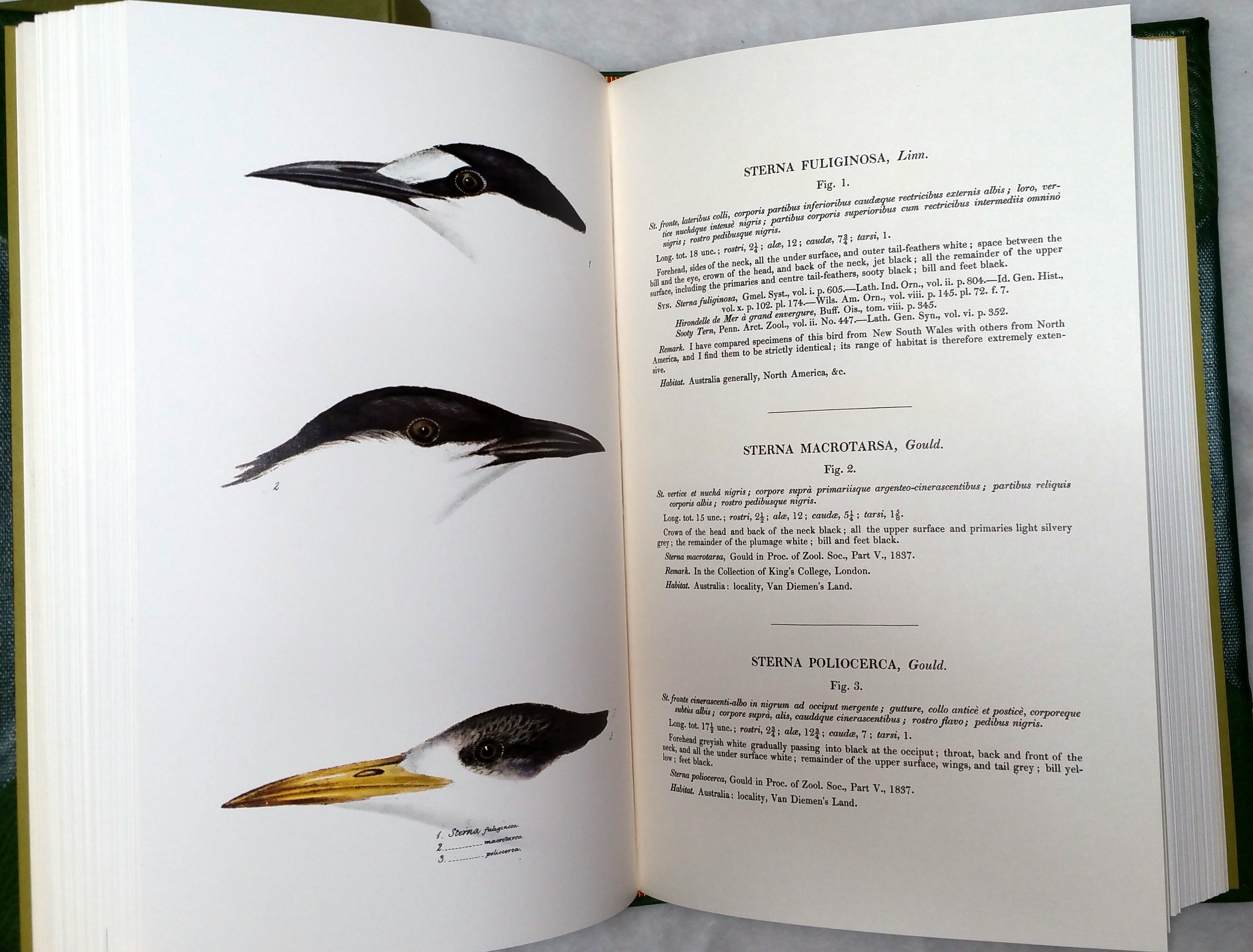 Image for A Synopsis of the Birds of Australia and the Adjacent Islands