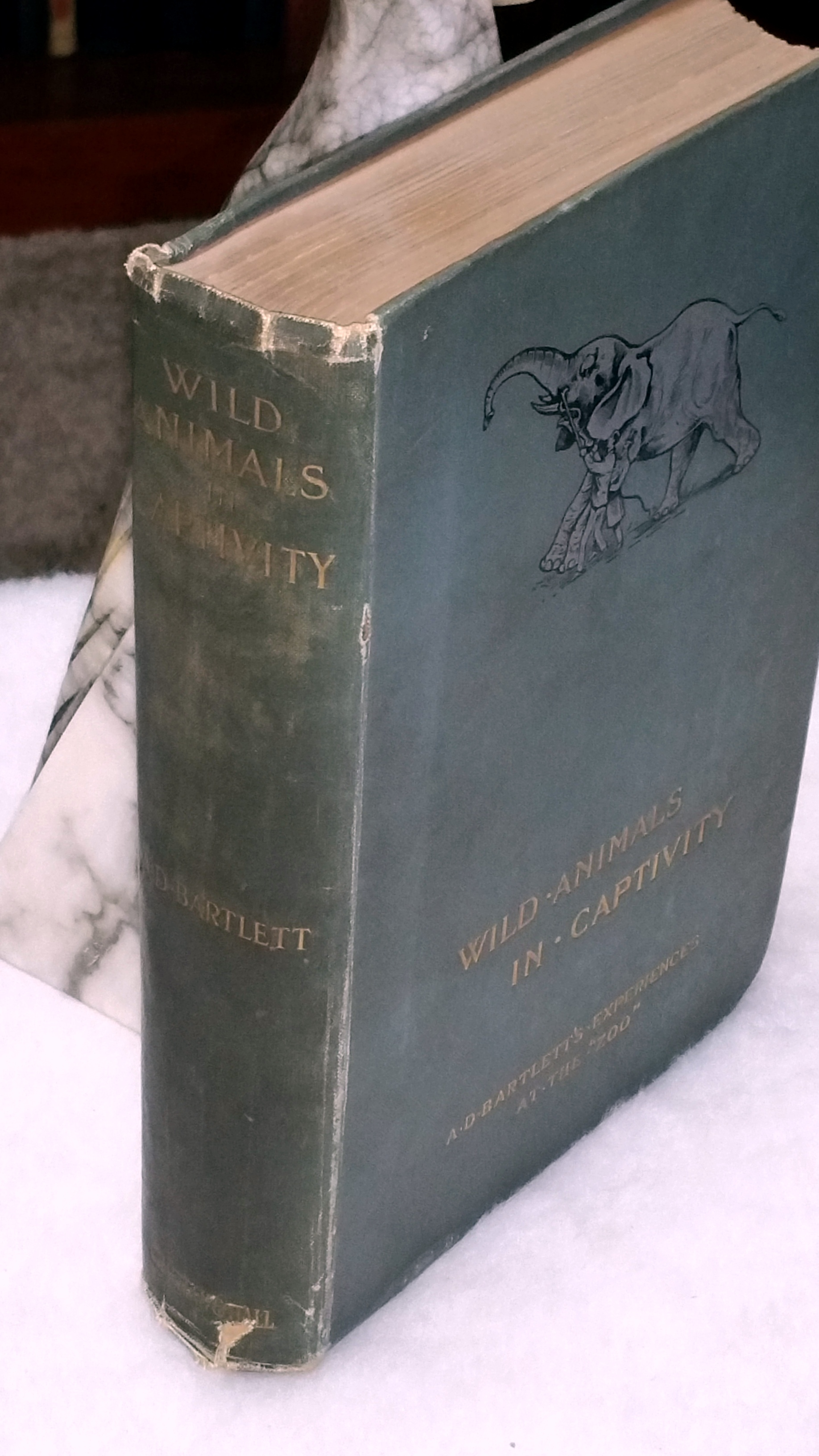Image for Wild Animals In Captivity:  Being an Account of the Habits, Food, Management and Treatment of the Beasts and Birds at the Zoo, with Reminiscences and Anecdotes