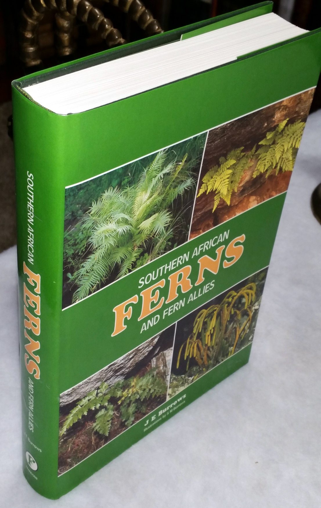 Image for Southern African Ferns and Fern Allies