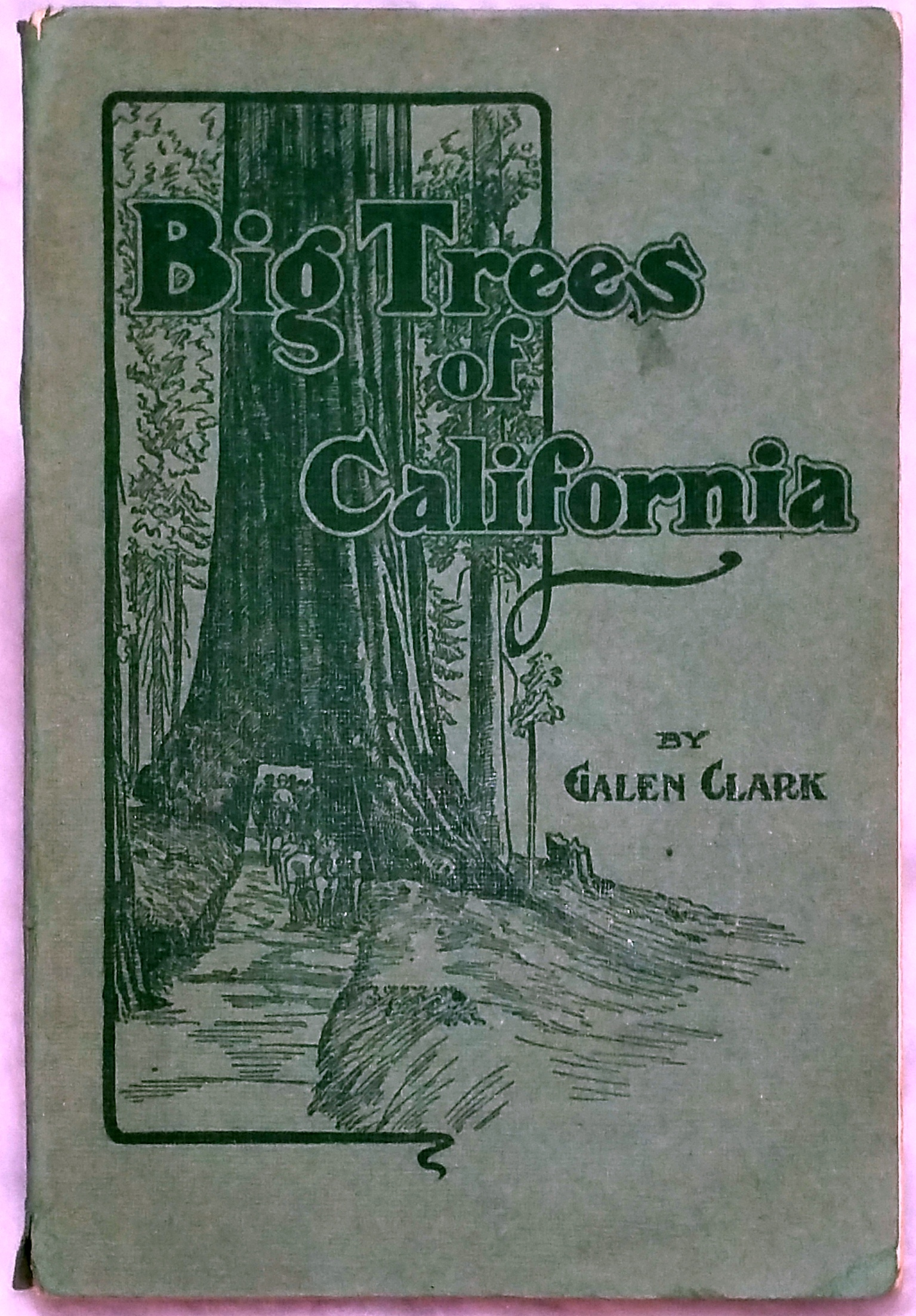 Image for The Big Trees of California:  Their History and Characteristics