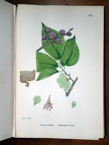 Image for English Botany or Coloured Figures of British Plants (Thirteen Volumes)