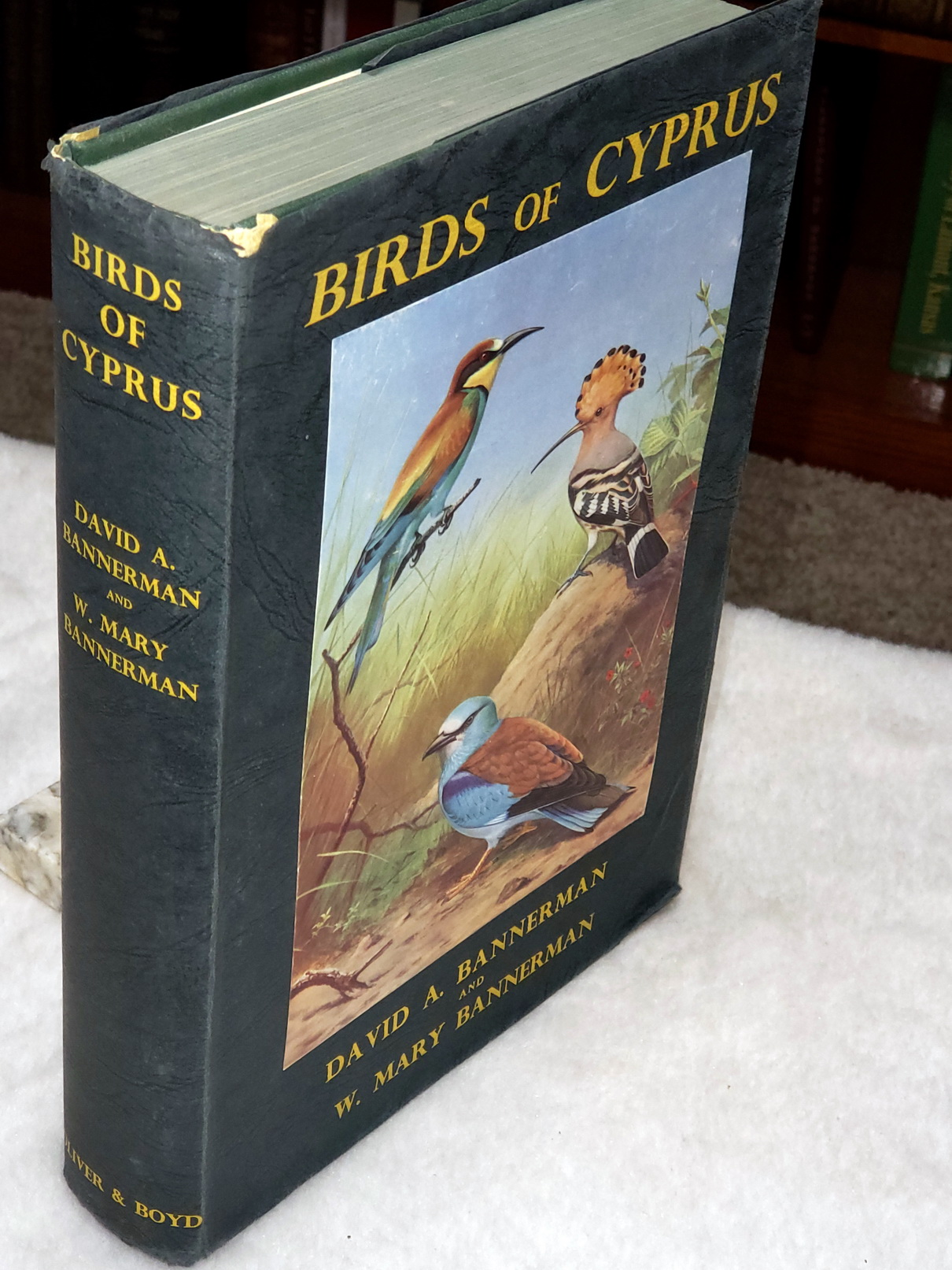 Image for Birds of Cyprus