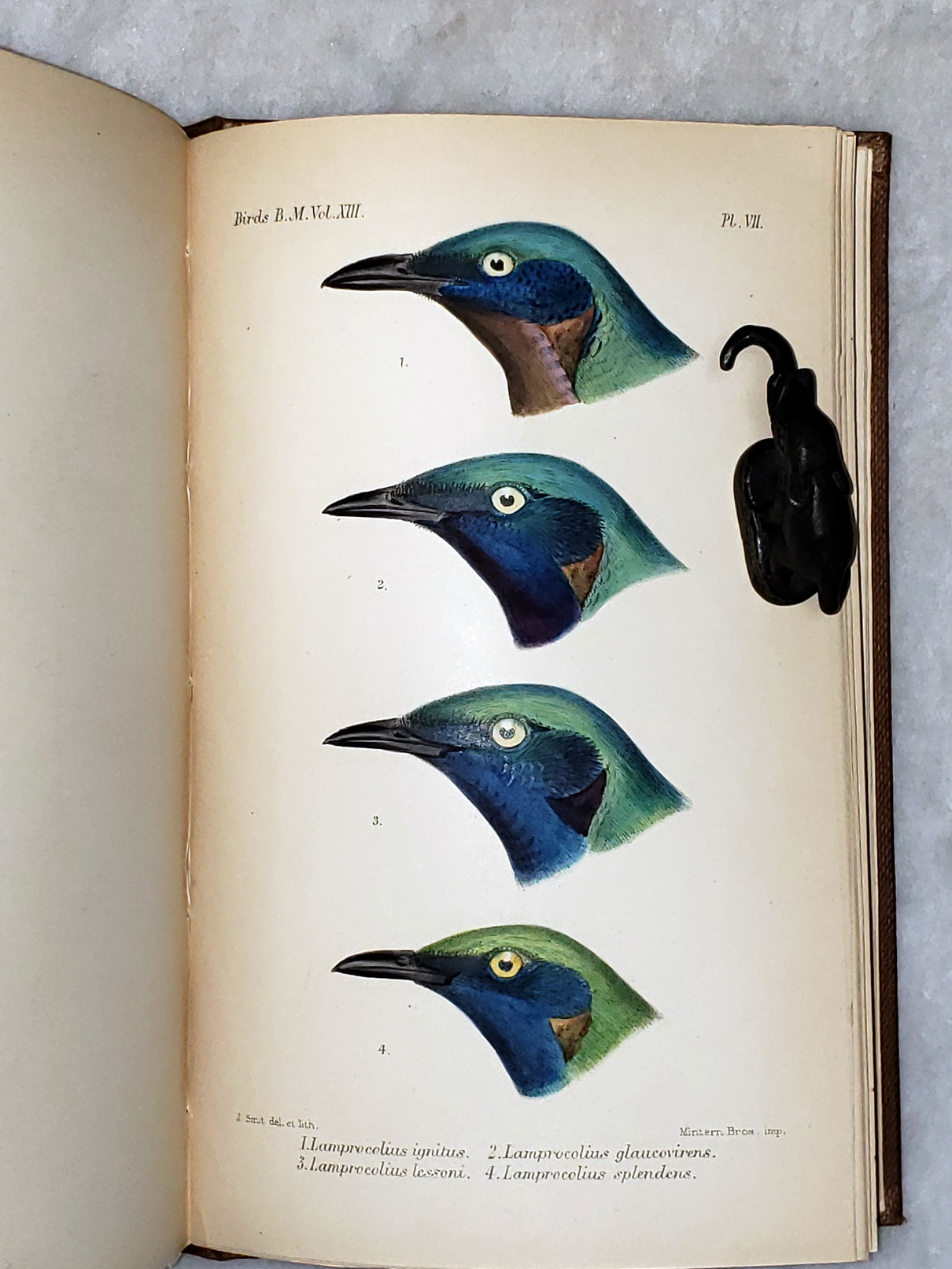 Image for Catalogue of the Birds in the British Museum. Volume XIII (13):  Catalogue of the Passeriformes, or Perching Birds, in the Collection of the British Museum.  Sturniformes...
