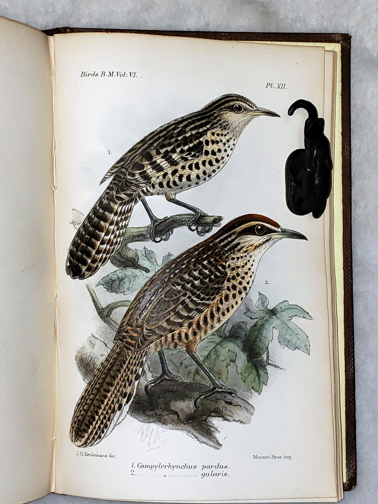 Image for Catalogue of the Birds in the British Museum. Volume VI (6):  Catalogue of the Passeriformes, or Pearching Birds, in the Collection of the British Museum.  Cichlomorphae: Part III...