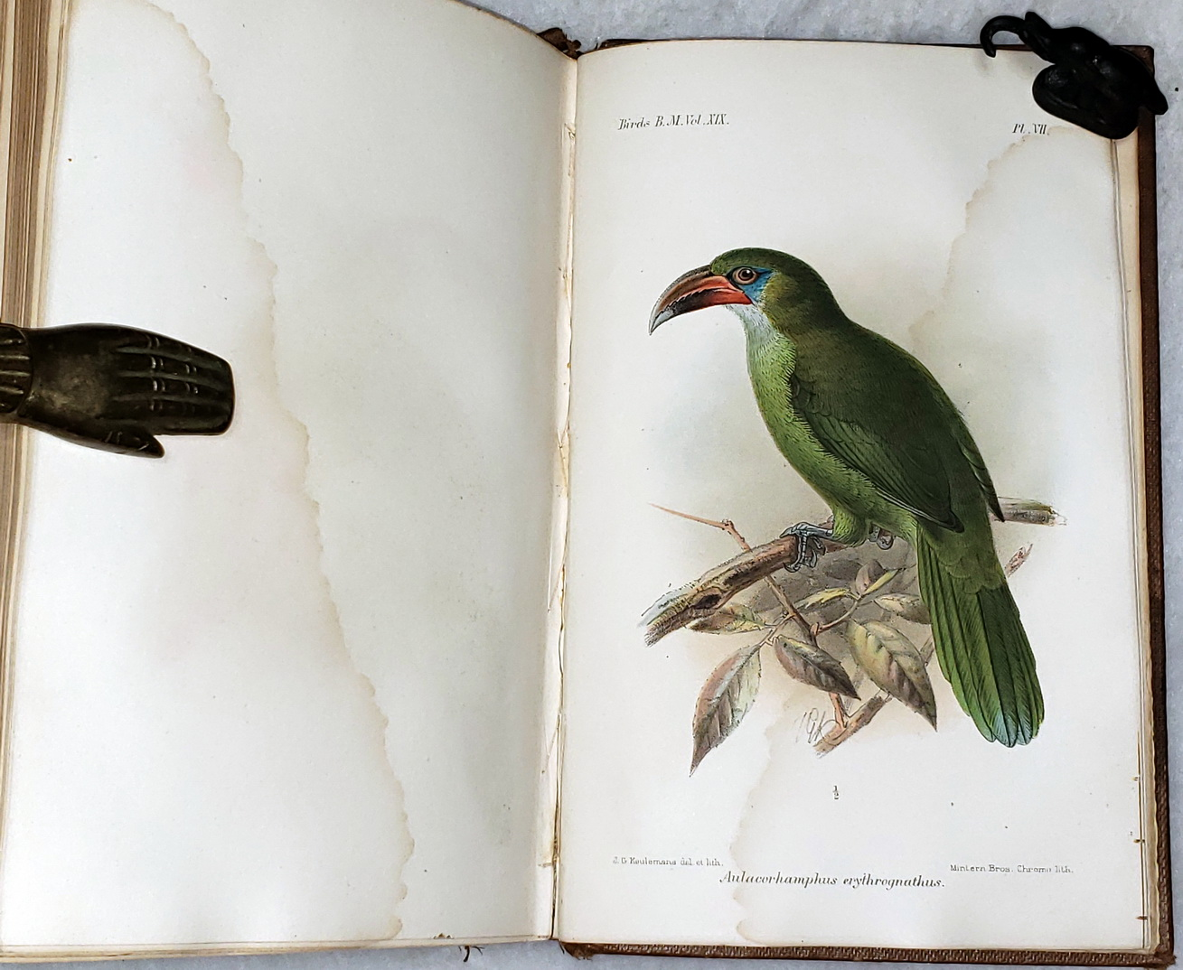 Image for Catalogue of the Birds in the British Museum. Volume XIX (19):  Catalogue of the Picariae, in the Collection of the British Museum.  Scansores and Coccyges...