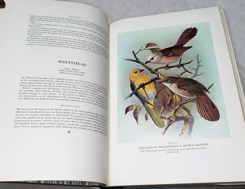 Image for Buller's Birds of New Zealand:  A History of the Birds of New Zealand